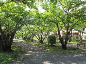 香澄2号緑道徒歩2分(約153m)